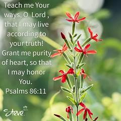 Psalm 86:11 (Steve Stambaugh Jr.) Tags: red flowers scripture god christ inspiration nature nikon d5500 beautiful amazing wonderful royalcatchfly psalm