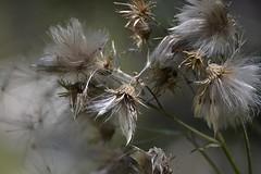 Natura (giorgiona89) Tags: fiore fiori natura pianta leggera white