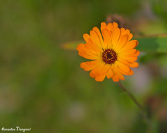 Nature (amee@work) Tags: orange bokeh september 2016 canon40d 85mm 18 north shore minnesota nature