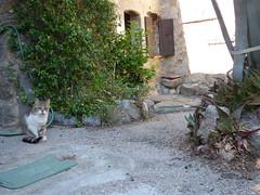 Chat d'Eus (thiery49) Tags: chat eus cat pyrnes catalan