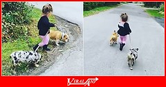 Little girl preciously walks pair of dogs (ViralAIO) Tags: littlegirl pairofdogs precious walk