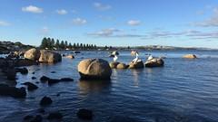 23rd September 2016 (ABC News SA Weather Photos) Tags: adelaide south australia abc news weather