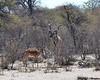 Botswana Hunting Safari 29