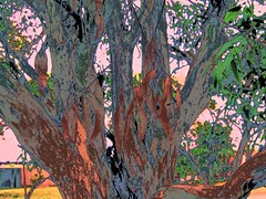 Abstract Gum Tree (maginoz1) Tags: summer abstract canon gum flora plum vic aus g16 bulla dec2014