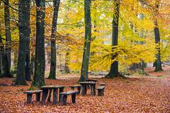 autumn tree forest bench nationalpark woods skog höst träd söderåsen bänk kopparhatten