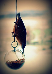 Illusive animals - nuthatch (Henrik Bidstrup Jrgensen) Tags: winter birds denmark vinter olympus mygarden fugl nuthatch siluette e510 illusive fugle sptmejse mejse hjeds illusiveanimals