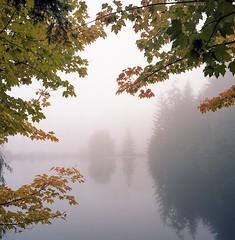 Fall Frame (Aaron Bieleck) Tags: lake fall 6x6 film leaves fog analog square landscape washington 120film whidbeyisland pacificnorthwest portra refelction hasselblad500cm kodakportra160