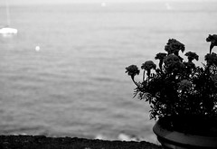 Emotions in B&W (Girl with love in her eyes) Tags: morning flowers sea summer blackandwhite white plant black flower nature wall photo seaside amazing flickr waves mood loneliness details memories picture wave august pot photograph vase moment sorrento capture effect morgen flowerpower summer2014 afterwave