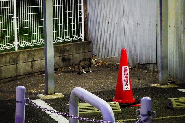 Today's Cat@2015-01-10