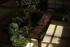 DSC01809 (m tachibana) Tags: japan
