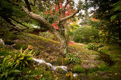 "Autumn Colors (Herve ""Setaou"" BRY) Tags: autumn trees paris france tree fall water automne garden japanesegarden eau stream ledefrance jardin arbres leafs arbre feuilles boulognebillancourt ruisseau jardinjaponais vgtaux musealbertkahn"