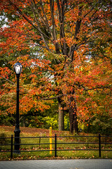 Fall in central park (JoLoLog) Tags: usa ny newyork tree fall centralpark fallcolors raya yellows reds lorien canon6d