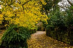 Cotehele Gardens (trevorhicks) Tags: autumn trees leaves gardens canon cornwall path national trust tamron cotehele 700d