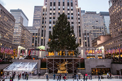 2014 Rockefeller Tree Installation in New York City