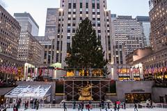 2014 Rockefeller Tree Installation in New York City