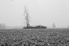 (joeldinda) Tags: winter blackandwhite bw snow tree field weather raw seasons michigan fields roxand v2 roxana grandledge 2014 underbrush joeldinda 2633 eatoncounty 1v2 nikon1v2