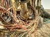 2014-11-06 14.23.43 (felipefonseca) Tags: trip junk tires fieldtrip lixo qatar craftsmen gambiarra vcuq repairmen mfavcuq