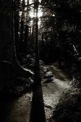 the woods (E-Maxx) Tags: canada vancouver woods vancouverisland elitechrome wald kodakelitechrome200