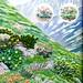 Plants of Japan's Tundra