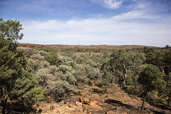View from Historic Site (oz_lightning) Tags: nature ecology landscape australia nsw newsouthwales eucalyptus geology aus cupressaceae acacia arid myrtaceae mimosaceae canonef24105mmf4lisusm callitris canon6d mutawintjinp