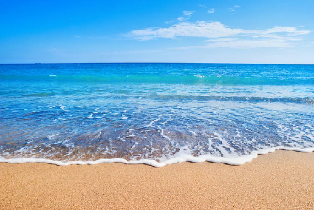 say sóng biển