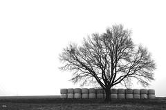 feed (peterpe1) Tags: winter tree weide flickr meadow feed baum futter peterpe1