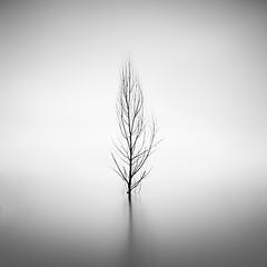 One (Xose Casal) Tags: longexposure blackandwhite black tree nature water fog landscape blackwhite quiet foggy minimal minimalism waterscape neutraldensity xosecasal