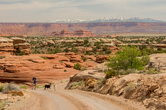 dogs and hiker Canyonlands NP (maryannenelson) Tags: mountains dogs landscape utah nationalpark spring outdoor hiking canyon canyonlands hiker