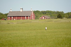 Walking the Gettysburg battlefield (Sarah Hina) Tags: redbarn gettysburg pickettscharge battlefield civilwar man field