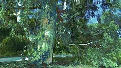 Gum Tree (maginoz1) Tags: autumn abstract art canon flora australia melbourne victoria gumtree bulla g3x may2016