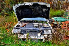 fiat tipo (riccardo nassisi) Tags: auto abandoned car rust ruins fiat rusty rover land pr scrapyard parma wreck scrap wrecked ruggine relitto rottame epave abbandonata campagnola relitti worldcars