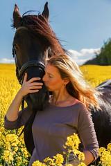 Susi und Ferdinand (Michael Lumme) Tags: portrait photography pony pferde raps pferd harz friesen frhling rapsfeld friese sachsenanhalt rapsblte rapsknospe photomicha