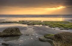 Coquina Beach Sunrise (Patty Bauchman) Tags: statepark beach sunrise landscape moss florida atlanticocean natture palmcoastflorida coquinarock washintonoaksstatepark
