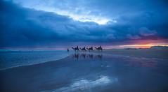 ~ in your dreams ~ II (Ananthasubramanian) Tags: travel sunset colors landscape australia camels portstephens downunder