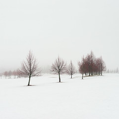 Winter Poem V (Vesa Pihanurmi) Tags: snow winter trees fog mist minimalism espoo finland white misty