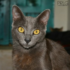 (Paula R. Ladrn de Guevara) Tags: pet animal cat chat interior gato katze mascota gat