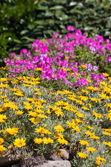 20160616-7D2L6769 (ndall) Tags: flowers scilly tresco