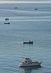 En plena faena (dialexis20) Tags: verano2012