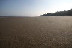 IMG_4323 (Crab2222) Tags: cloud sun beach clouds sand low wide sunny wideangle groyne bournemouth beachhuts sunnyday groynes lowangle