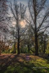 Sunday afternoon_0117 (Manni750) Tags: trees winter sun rural bush australia nsw warren leafs