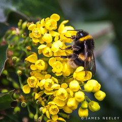 Actively Engaged (James Neeley) Tags: london nature bee hydepark jamesneeley