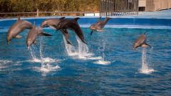 Jumping (rafa.esteve) Tags: espaa water valencia aquarium spain dolphin 16x9