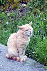 cat (shreyak25) Tags: vacation cats sun sunlight nature animals wildlife lazy sunight