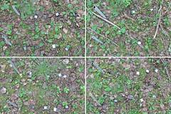 A projection on Plot 3, Rep. 2 (Yugra State University) Tags: decomposition greentea carboncycle raisedbog massloss mukhrinofieldstation roiboostea teabagindex teacomposition standardisedplantlitter