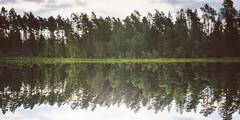 Forest Reflections (PonyHans / Castor) Tags: trees sea tree water forest 35mm reflections landscape reflecting 1 mirror woods ant voigtlander 14 4 f ants 35 voigtlnder myror insj porrarp