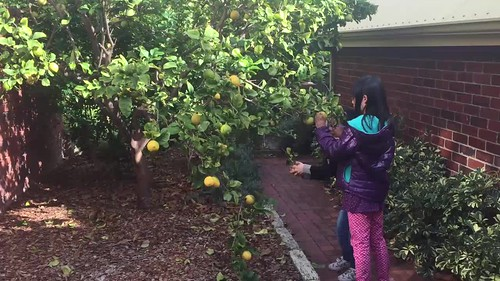 Plucking some lemons