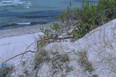 hidden.sunbathers (the.crystalimage) Tags: sea summer sun film beach water analog sand pentax grain ishootfilm analogue filmcamera expired grainisgood pentaxmesuper analogphotography kodakgold100 filmphotography bythebeach filmphoto filmisnotdead filmproject filmlove analoguephotography chinon50mmf17 justpentax filmcommunity filmfeed pentaxart epsonperfectionv550