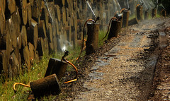 Drive Thru Refreshing (offroadsound) Tags: woodstorage refreshingwood storage trunks summer baumpflege happinessisawarmgun sprinkler