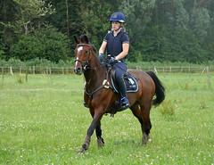 P1270053 (serita.vossen) Tags: horse horses eventing cross paardrijden paard