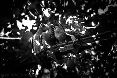 #FAUNA  & #ORGIA (ValeriaCamarda) Tags: canon canonclubitalia canonclub canonitalia canoncamera canonphoto canonphotography canonusa catania canonuk animals birds nature volgoitalia volgosicilia love inlove photograph photography pic photo picture summer summerlove summertime